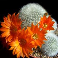 Занимательное кактусоводство