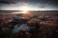 Вереск Шотландии