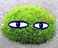 Зелёный-Мох