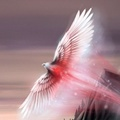 Крылья, дарующие надежду